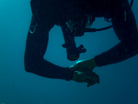 Advanced Specialty Dives October 14